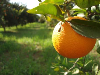 orange copy